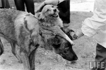 شاهد أشهر أبشع 10 تجارب علمية مميتة على الحيوانات في غاية الرعب!!