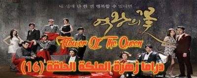 مسلسل زهرة الملكة الحلقة 16 Flower Of The Queen Episode مترجم