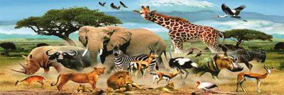 هل الحيوانات والطيور تدخل الجنة؟