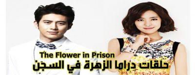 حلقات مسلسل الزهرة في السجن The Flower In Prison Episodes