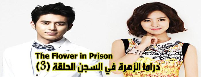 مسلسل The Flower In Prison Episode 3 الحلقة 3 الزهرة في السجن مترجم