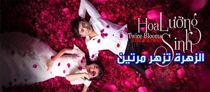حلقات مسلسل الزهرة تزهر مرتين Twice Blooms the Flower Episodes
